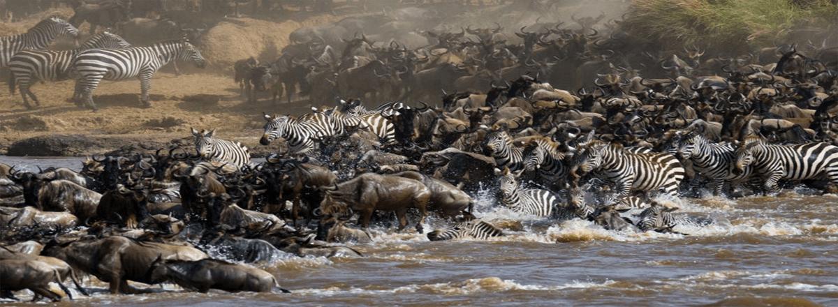 maasai mara migration image