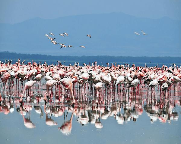 Lake Nakuru Feature Img